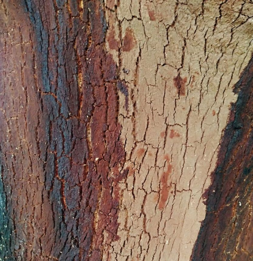 pattern on the cork trees